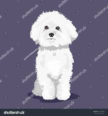 bichon frise 4 months old white bichon frise dog one color stock vector 525146638 shutterstock