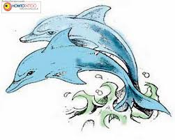 two dolphin tattoo design photos pictures and sketches