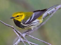 Nc Backyard Birds 40 Best Birds Of Western North Carolina Images On Pinterest