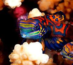 aquarium fishes names and pictures saltwater aquarium fish
