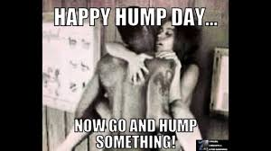Hump Day Meme - best hump day memes volume 1 youtube