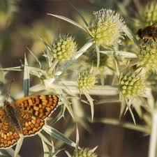 bees butterflies and flowers carolina com