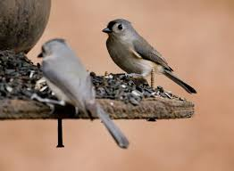 Alabama birds images Spring wild bird feeding jpg