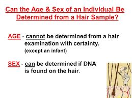 heavy pubic hair aim how is hair analyzed in forensics do now explain the possible