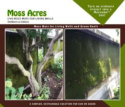live moss panels for living walls vertical gardens and green walls