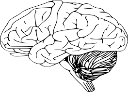 Free Vector Graphic Brain Intelligence Science Mind Free Brain Coloring Page