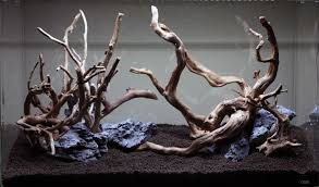 aquascaping layouts with stone and driftwood aquascaping season is officially here this time around a driftwood