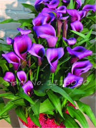 purple lily flower reviews online shopping purple lily flower