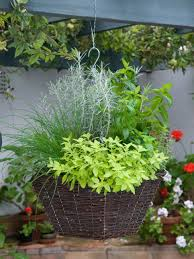 fragrant herb container combinations hgtv