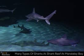many different types of sharks at mandalay bay fuzzy navels
