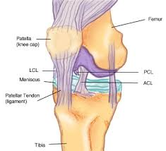Lateral Collateral Ligament Ankle Medial And Lateral Collateral Ligament Injuries Fit For Life
