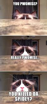 Funny Spiders Memes Of 2017 - 29 funny cat memes 10 so peachy