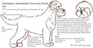 grooming u2013 labradoodles by design