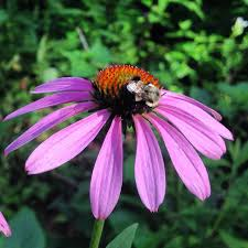 plants native to tennessee living landscapes design lab strawberry plains audubon center