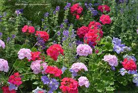 miroir jardin d ulysse déco jardin fleurie rennes 22 jardin dhiver veranda jardin
