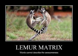 Lemur Meme - roundup lemur king s folly