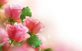100 flowers flowers twitter search best 25 flowers ideas on