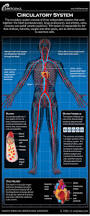 Anatomy Structure Of Human Body Human Circulatory System Diagram How It Works