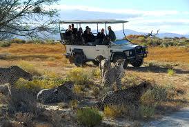 safari big five safaris near cape town