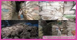 where to buy seashells 7 best seashells heaven about us cheapest seashells to buy in
