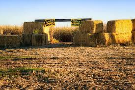 twin oaks farms id twin the 13 best corn mazes in idaho 2016