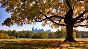 help us find philly s prettiest fall trees