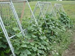 Make Your Own Cucumber Trellis Cucumber Trellis Link Mesh Can Be Used As Trellis For