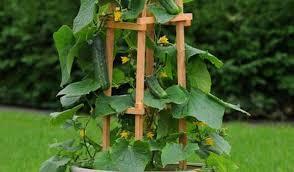 Building A Arbor Trellis Pergola Stunning How To Build A Trellis Trellis For My Grape