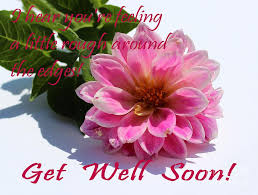 get well soon flowers get well soon louise dahlia pink flower photograph by barbara