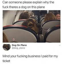 Why The Fuck Meme - can someone please explain why the fuck theres a dog on this plane