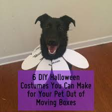 6 diy halloween costumes you can make for your pet out of moving