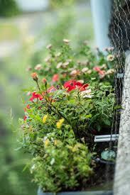 balkon bewã sserungssystem automatisches balkon bewässerungssystem mit gardena dect