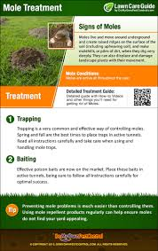 how to get rid of moles fast mole treatment u0026 control