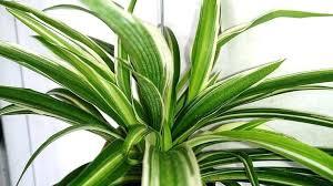 popular house plants popular houseplants u2013 hviezda club