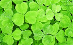 book ireland clover leaf 6909496