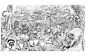 jungle forest animals jungle u0026 forest coloring pages for
