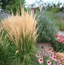 72 best many grasses images on gardening landscaping