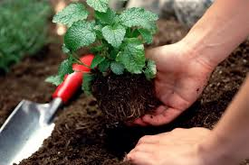 gardening picture amending your garden soil to make it better