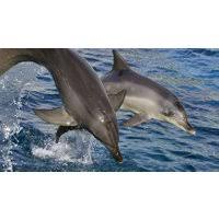 unique dolphin gifts dolphin gifts presents ideas gift finder seek gifts