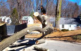 tree removal wichita ks wichita tree removal service