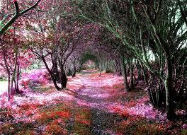 23 most beautiful tree tunnels in the world it s definitely