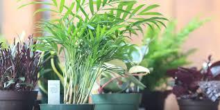 outdoor potted plants u2013 flower pots gallery