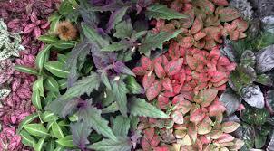 indoor and terrarium plants northgate greenhouses
