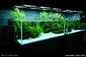 takashi amano sumida aquarium display tanks page 2 uk