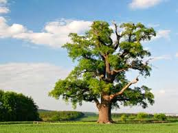 tree pictures howstuffworks