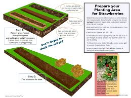 Strawberry Bed How To Grow Strawberries