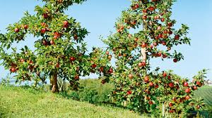 sanlucar fruits our colourful diversity at a glance