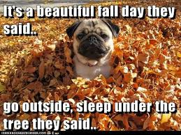 Fall Meme - 14 fall memes so you can usher in the greatest season of them all