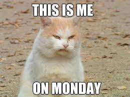 Monday Cat Meme - this is me on monday monday cat quickmeme