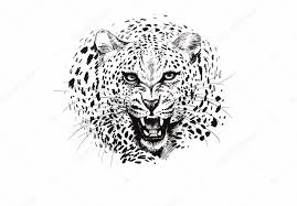 angry leopard muzzle black and white sketch u2014 stock vector